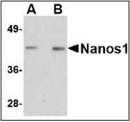 AP30580PU-N - NANOS1