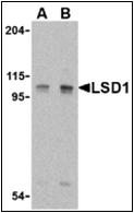 AP30521PU-N - AOF2