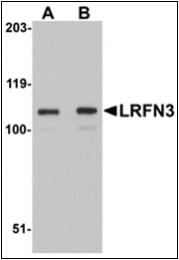 AP30516PU-N - LRFN3