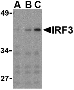 AP30447PU-N - IRF3