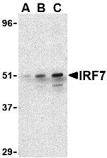 AP30449PU-N - IRF7