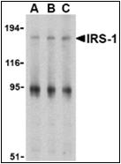 AP30456PU-N - IRS1