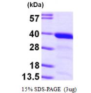AR09640PU-L - GGPP synthetase