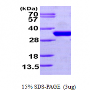 AR09648PU-L - CDC34