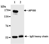 AM20189AF-N - SNAP91