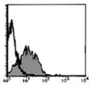 AM20199AF-N - PSMA / FOLH1
