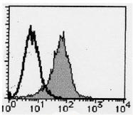 AM20199FC-N - PSMA / FOLH1