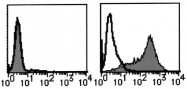 AM20199RP-N - PSMA / FOLH1