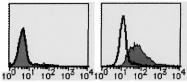 AM20200FC-N - CD109 / CPAMD7