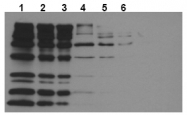 AM20209PU-N - Biotin