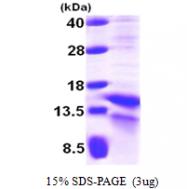 AR09668PU-N - HIF1A / HIF1 alpha