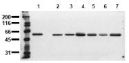 AM00146PU-N - SRC1