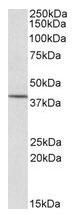 AP15987PU-N - CYTIP / PSCDBP