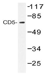 AP20211PU-N - CD5