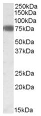 AP26006PU-N - EBF1 / COE1