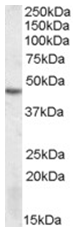 AP26010PU-N - STK17B / DRAK2