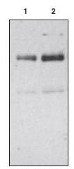 AP08228PU-N - CD36