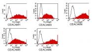 DM1204 - CD66e / CEACAM5