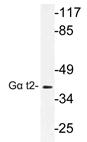AP21187PU-N - GNAT2 / GNATC