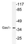 AP21186PU-N - GAS1