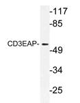 AP21165PU-N - CD3EAP