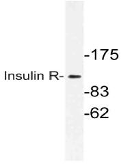AP21114PU-N - CD220 / INSR