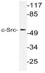 AP21124PU-N - SRC1