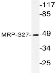 AP21074PU-N - MRPS27