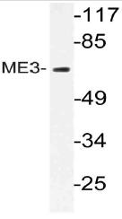 AP21077PU-N - ME3
