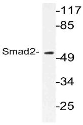 AP21095PU-N - SMAD2
