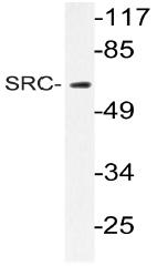 AP20996PU-N - SRC1