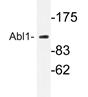 AP20962PU-N - ABL1