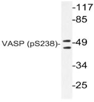 AP20815PU-N - VASP
