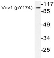 AP20816PU-N - VAV1