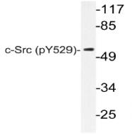 AP20819PU-N - SRC1
