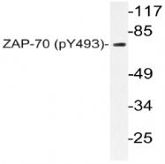 AP20821PU-N - ZAP70