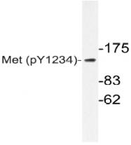 AP20840PU-N - HGF receptor