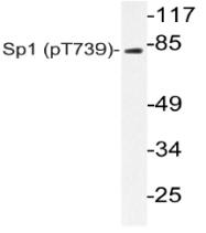 AP20842PU-N - SP1 / TSFP1