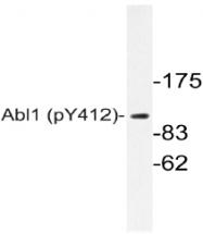 AP20872PU-N - ABL1