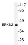 AP20727PU-N - MAPK3 / ERK1