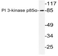 AP20772PU-N - PIK3R1 / GRB1