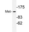AP20720PU-N - HGF receptor