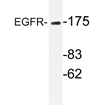 AP20708PU-N - EGFR / ERBB1