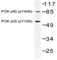 AP20797PU-N - PIK3R1 / GRB1