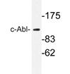AP20696PU-N - ABL1
