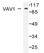 AP20693PU-N - VAV1