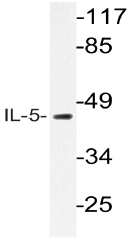 AP20595PU-N - Interleukin-5 / IL5