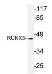 AP20638PU-N - RUNX3