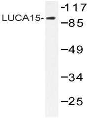 AP20525PU-N - RBM5 / LUCA15