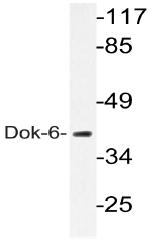 AP20534PU-N - DOK6 / DOK5L